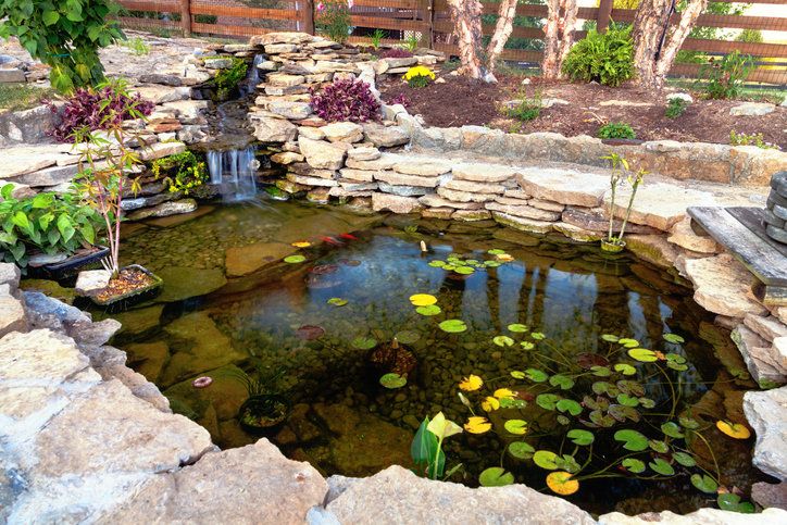 Decorative water feature pond in a backyard garden